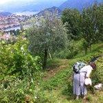 Photo de B&B L'Isola Comacina