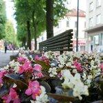 Цветы возле скамейки по центру улицы