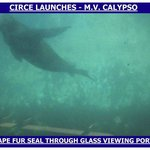A seal viewed through our glass bottom boat CALYPSO