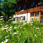Schöne Blumenwiese vor dem Gästehaus