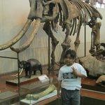 with pre historic elephant skull replica