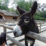 Best Donkey