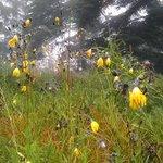 prato di bosco con fiori