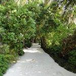 Pathway to breakfast