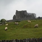 view of Rock of cashel otw to hore abbey