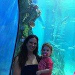 Rumfish Aquarium view room