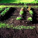 Lovely soil enriched with organic compost