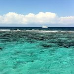 reef snorkeling after stingray city