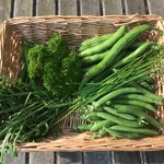 Fresh produce from our allotments