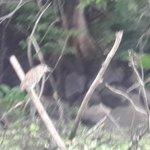 Tour por las isletas - Observación de aves