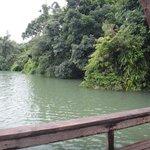 Le lac est entouré d'arbres d'où l'on peut sauter dans l'eau