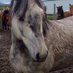 Very beautiful horses