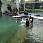 Getting to know your Dolphin