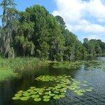 O Blue Heron fica na beira deste lago lindo