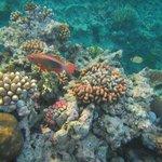 Reef Snorkel