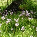 Taft Point Trail, Yosemite NP, California:Wildflowers by creek