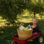 Tuttle provides a wagon, basket and bag for picking apples