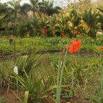 View over water purification ponds in garden