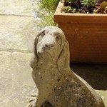 Ein Freund im Garten