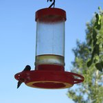 one of many hummingbirds