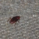Roach on floor in room