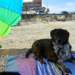 Our Catahoula on the FREE beach in front of our hotel, La Quinta East Beach and Holiday Inn Suns