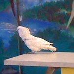 Connyland Papageienshow