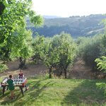 Foosball in the olive grove