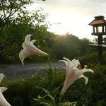 Brierly B&B lovely gardens