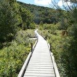 boardwalk leading to falls
