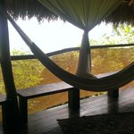 You can get an idea of the mesh and low hanging palms that make the actual view small...