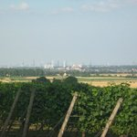 view to Frankfurt over the vineyards