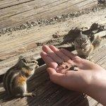 feeding chipmunks