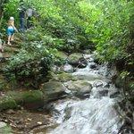 coffee tour hike- beautiful scenery