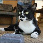 Tai Chi the yoga kittie