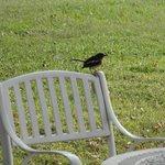 Birds visiting
