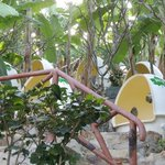 Mud bath in egg room near by banana trees