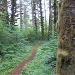 Mount Hebo Trail
