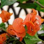 Romantic Suite Sultana - Balcony flowers