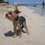 Наша маленькая путешественница рычала на волны :)
