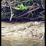 crocodile!!
