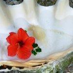 clam shell for rinsing feet