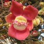un bellissimo fiori nel giardino