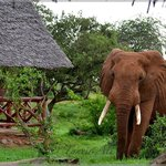 Ndololo Tented Camp -Tsavo East