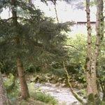 Le ruisseau au bas du jardin