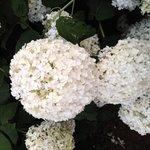 Wonderful flowers in the hotel's garden