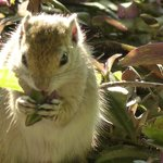 Tree squirrel outside room