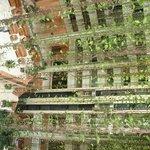 Cour intérieure avec plantes