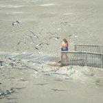 feeding seagulls leftovers