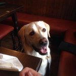 Dog friendly pub, recommended by Barney!